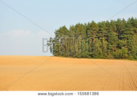 Agricultural earthy plowed field and coniferous forest in perspective against the blue sky.