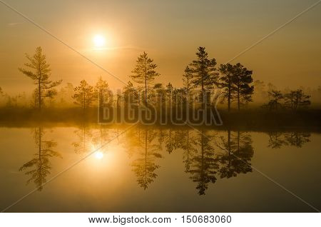 Bog landscape with rising sun, bog pines and reflection in the water.