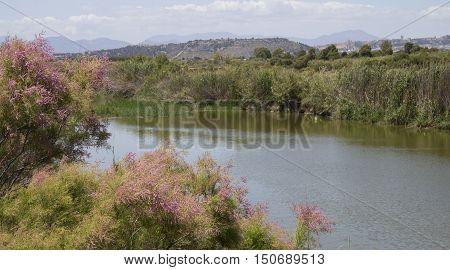 QUARTU S..E: overview of saline in the Molentargius Regional Park - Sardinia