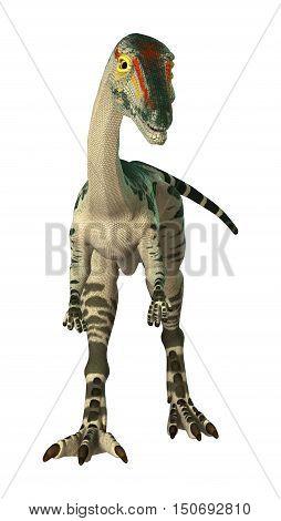 3D Rendering Dinosaur Coelophysis On White