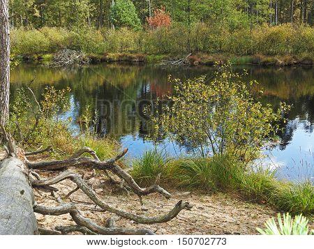 Silent Autumn River