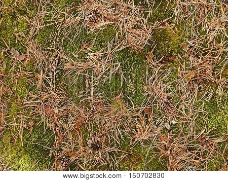 Abstract Texture Of Forest Elements