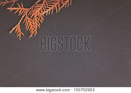 Dry orange thuja branch on blackboard with copy space
