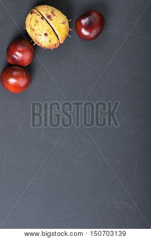 chestnuts in shell on blackboard with copy space