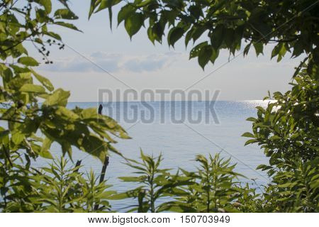 A view of lake erie from Point Pelee National Park in Ontario, Canada.