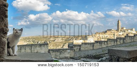 Matera (Basilicata Italy) Matera (Basilicata Italy) scenic panorama with curious cat