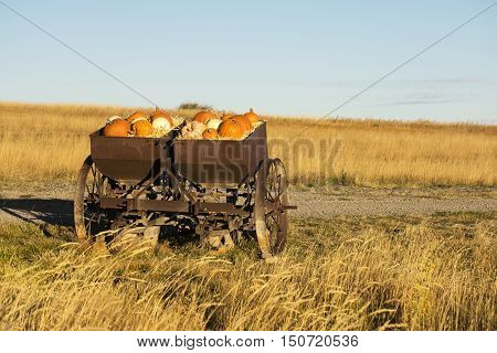 Autumn pumpkins and gourds in a rustic farm implement