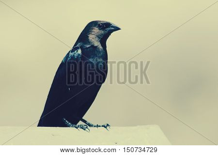 Little black and brown bird sitting on ledge,