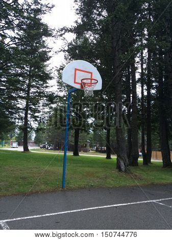A basketball hoop in amongst a bunch of trees.