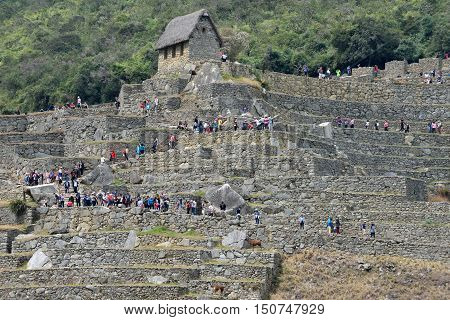 MACHU PICCHU PERU - September 02 2016: Tourists walk in Machu Picchu site on September 02 2016. Machu Picchu Unesco World Heritage site and New 7 Wonder of the world.