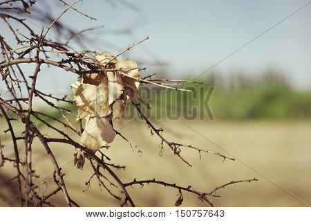 Dry leaf caught in the branches, in autumn