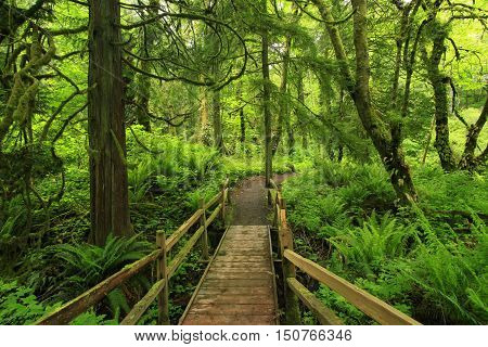 a picture of an exterior Pacific Northwest forest trail with wood bridge