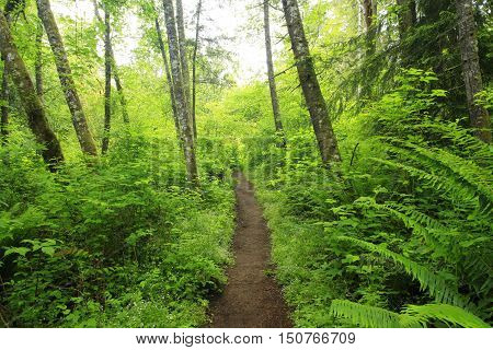 a picture of an exterior Pacific Northwest forest hing trail