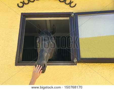 Horse head throw the window of stable