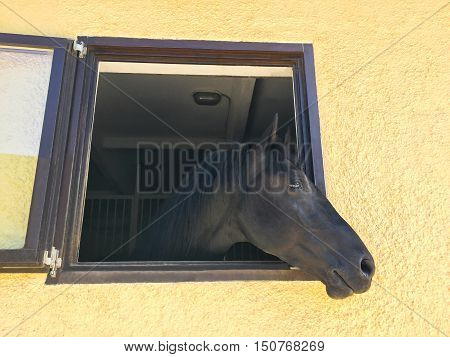 Horse head throw the window of stable of Poiana Brasov, Romania
