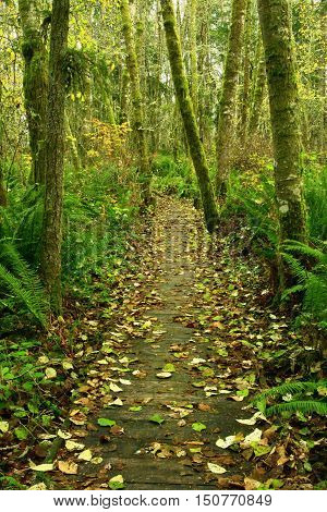 a picture of an exterior Pacific Northwest forest boardwalk hiking trail in fall