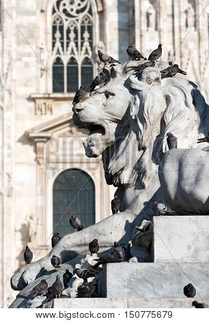 Many pigeons above a lion marble statue in downtown of Milan (Milano) in Piazza Duomo (Duomo square) Lombardy Italy