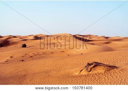 desert dune background on blue sky.Arabian desert near the city of Dubai. part of the hot desert with bushes and clumps