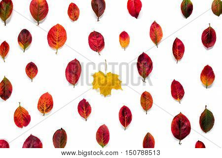 Flat composition of yellow maple leaf contrasts with red autumn leaves ornament on white background. Concept uniqueness, individual, not such as all.