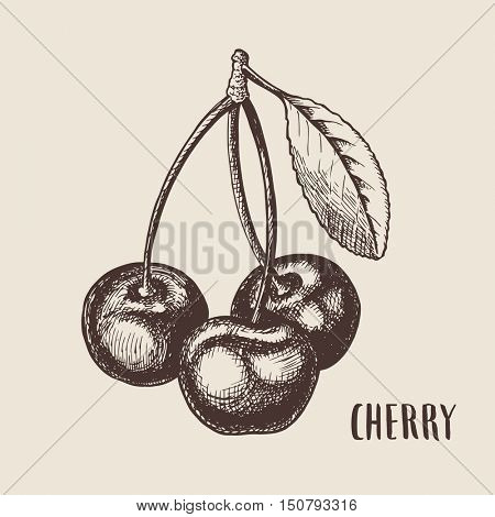 Hand drawn sketch style cherry composition. Healthy food vector illustration.
