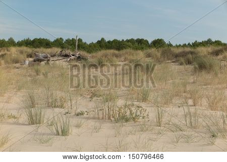 Branches on the beach or driftwood at summer