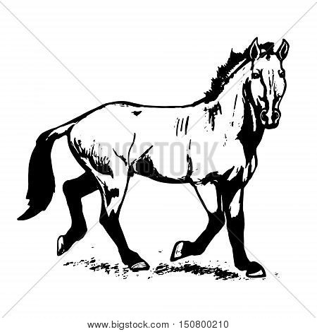 The Przewalski's horse an abstract image on a white background. Vector illustration picture a wild stallion