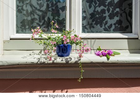 An old house window decorated with flower pots in Bamberg Germany