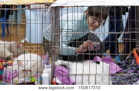 Murmansk, Russia - October 17, 2015: A visitor photographs the animals at cat show