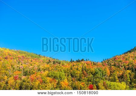 Autumn Colors On Chic-chocs Mountains In Gaspesie, Quebec, Canada.