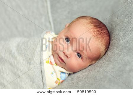 The newborn baby is 9 days old lies wrapped over a gray background. Beautiful boy is awake and quietly watching. Swaddling children