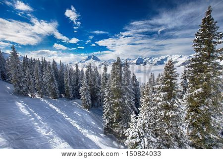 Trees Covered By Fresh Snow In Austria Alps From Kitzbuehel Ski Resort - One Of The Best Ski Resort