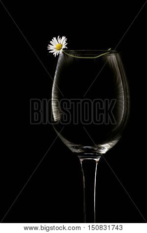White Flower And Empty Wine Glass