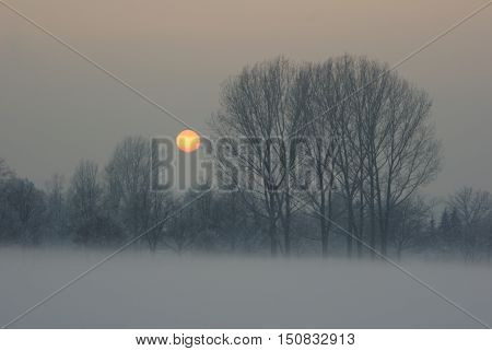 Icy sunset with foggy meadow, Saxony, Germany
