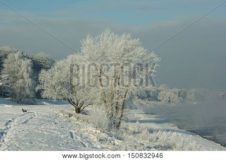 Frosted trees on the shore of the river Elbe, Dresden, Germany