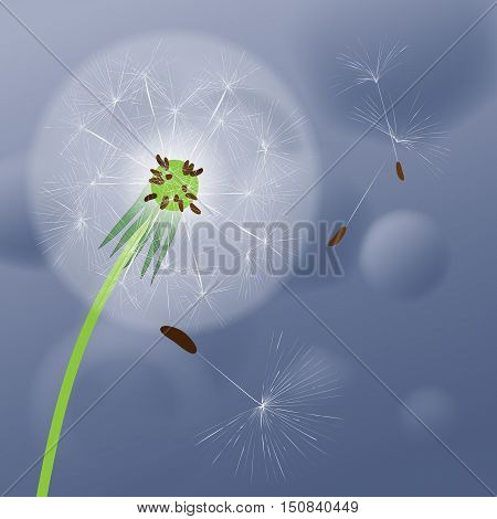 Dandelion on abstract blue-gray background. Vector image of a dandelion.