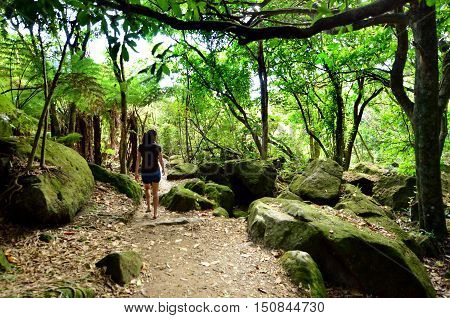 Visitor walks in a wild nature view of rain forest in Te Whanganui-A-Hei (Cathedral Cove) Marine Reserve in Coromandel Peninsula North Island New Zealand.