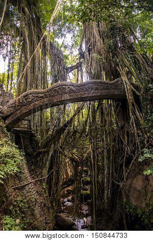 Bali Indonesia Ubud famous Monkey Forest bridge Temple