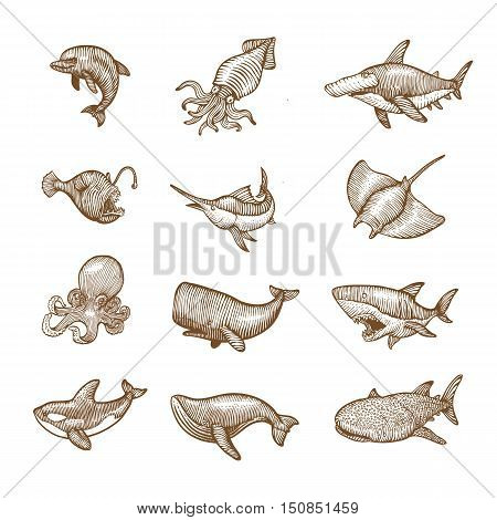 Set of aquatic Animals Hand drawing vector illustration.