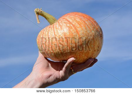 One Too Many Pumpkin variety held by hand up against blue sky