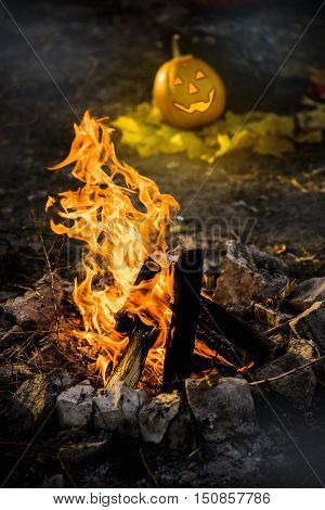 Bonfire blazing and Grinning pumpkin lantern or jack-o'-lantern is one of the symbols of Halloween. Halloween attribute. In the forest near the stone