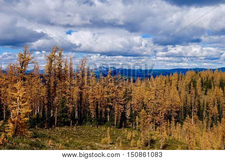 Autumn alpine forest, blue sky and clouds. Frosty Mountain. Hope. Manning Provincial Park. British Columbia. Canada.