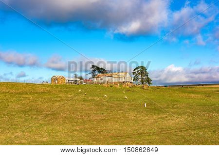 New South Wales Australia - May 29 2016: Farmhouse shed and paddock with grazing farm animals in rural Australia near town of Taralga. Outback agriculture scene with cattle