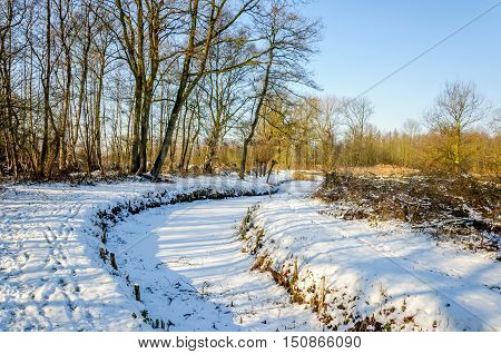 Snowy landscape in the Netherlands with trees and a curved ditch on a sunny day with a blue sky in the winter season.