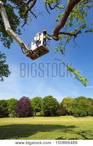 Tree Surgeon Using A Cherry Picker