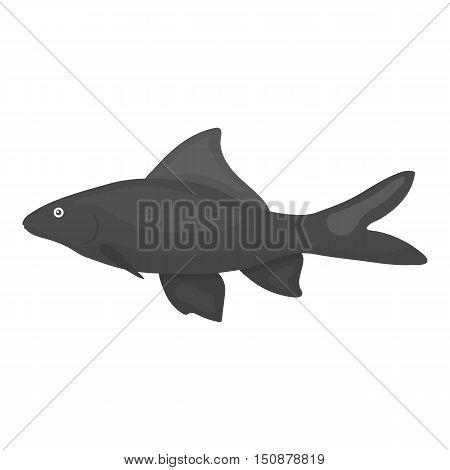 Red Tail Shark fish icon monochrome. Singe aquarium fish icon from the sea, ocean life monochrome.