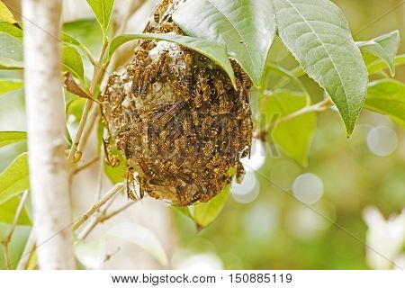 Swarm of Wasps with Wasp Nest on Tree