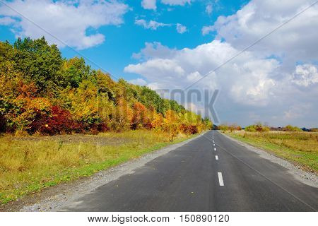 Autumn landscape road, roadside trees with yellowed leaves