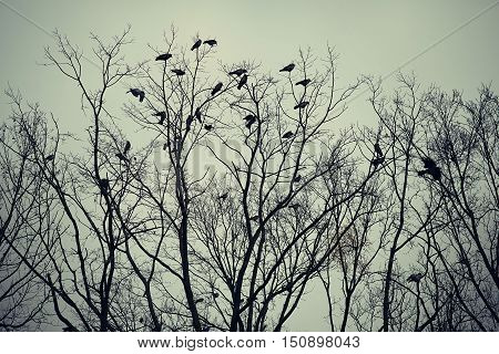 Group of crows sitting on a tree against the sky