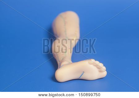 Medical acupuncture model of human feet on blue background