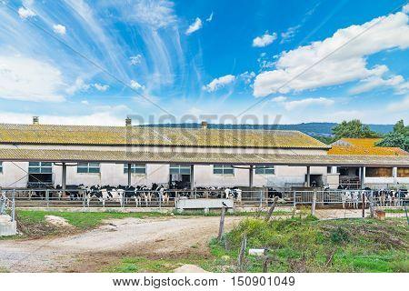 cattle farm under a blue sky in Sardinia